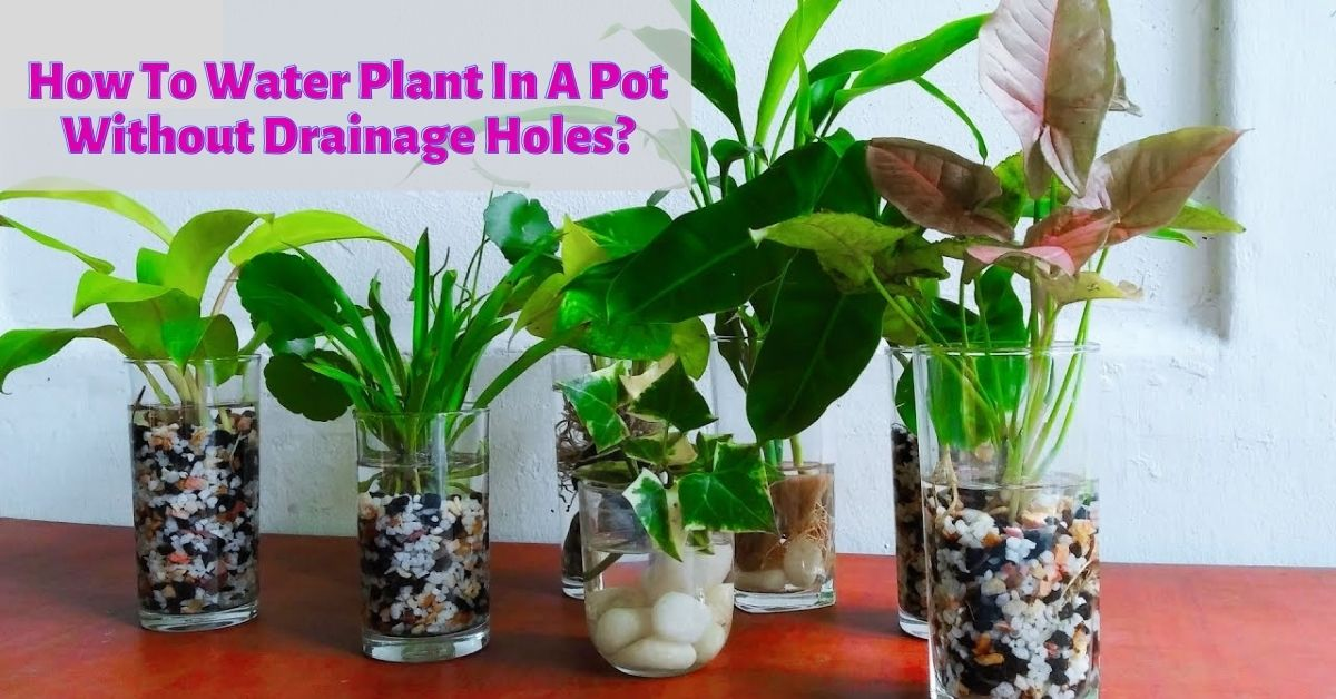 How To Watering Planters In Pots Without Drainage Holes 2021